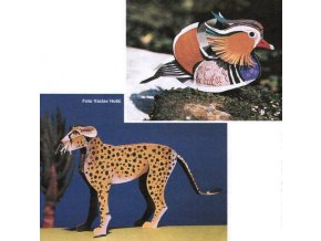 gepard + kachnička mandarínská