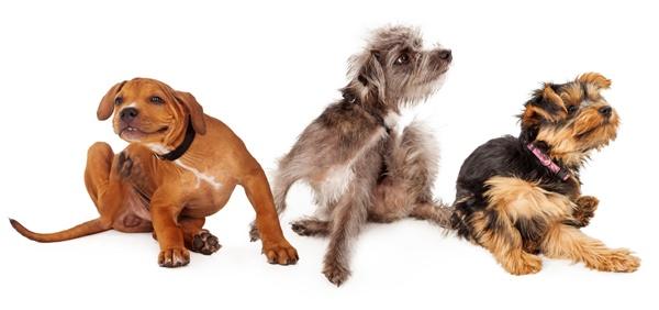 Psi se drbou