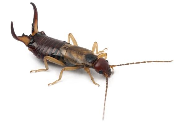 Detailní fotografie švába