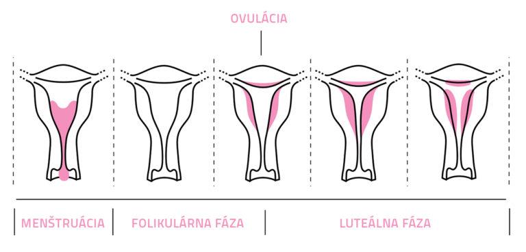 menstruacni-cyklus_faze-768x368