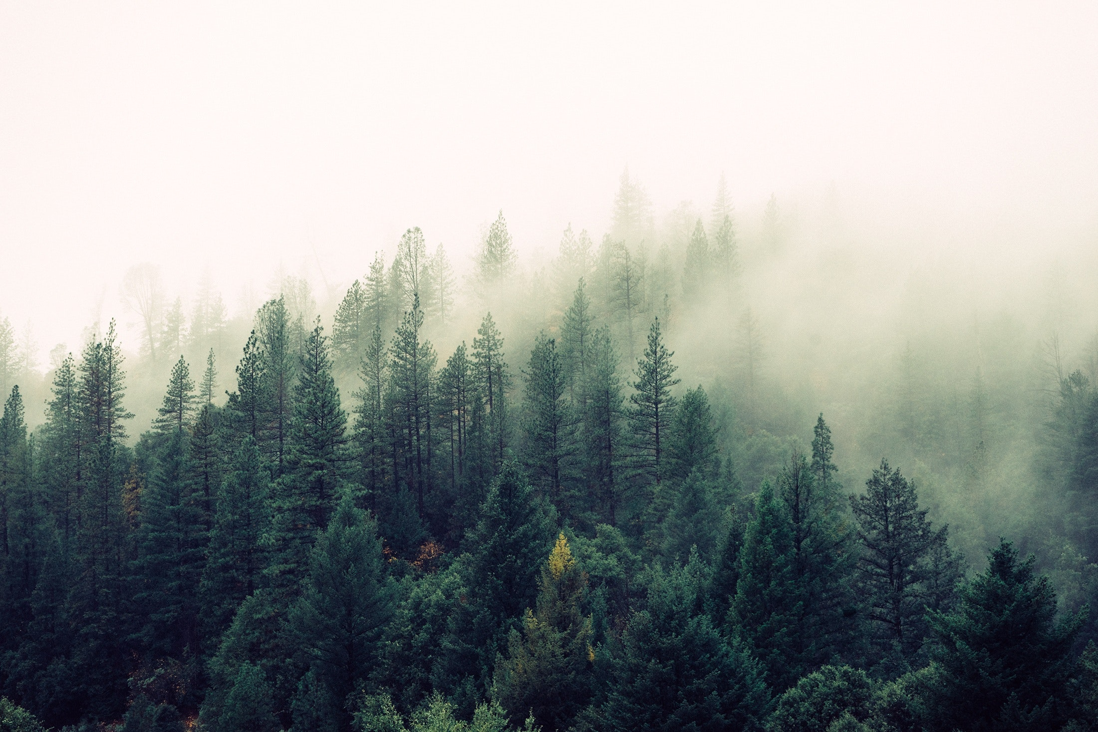 nature-forest-trees-fog-4827