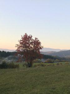 krasna farebna jesen - strom na luke