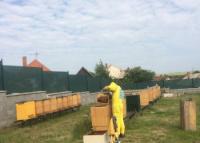 Práca so včelami