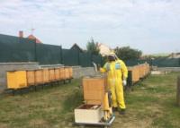 Práca na včelnici