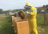 Kontrola včelích rámikov