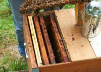 Včelí úľ a dymák