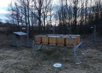 Včielky sú už na svojom mieste