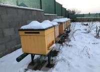 Včielky zimujú