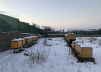 Zimovanie včiel