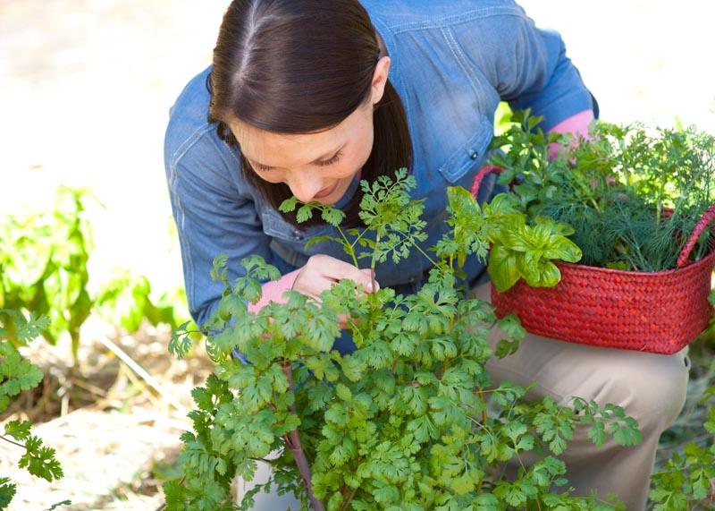 jedle-byliny-rostliny-prehled-vsech-jedlych-bylinek-vyskytujicich-se-na-uzemi-cr