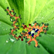 phantatomix_018_chlorophyl