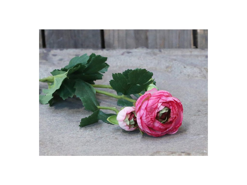 Pryskyřník Chic - růžový