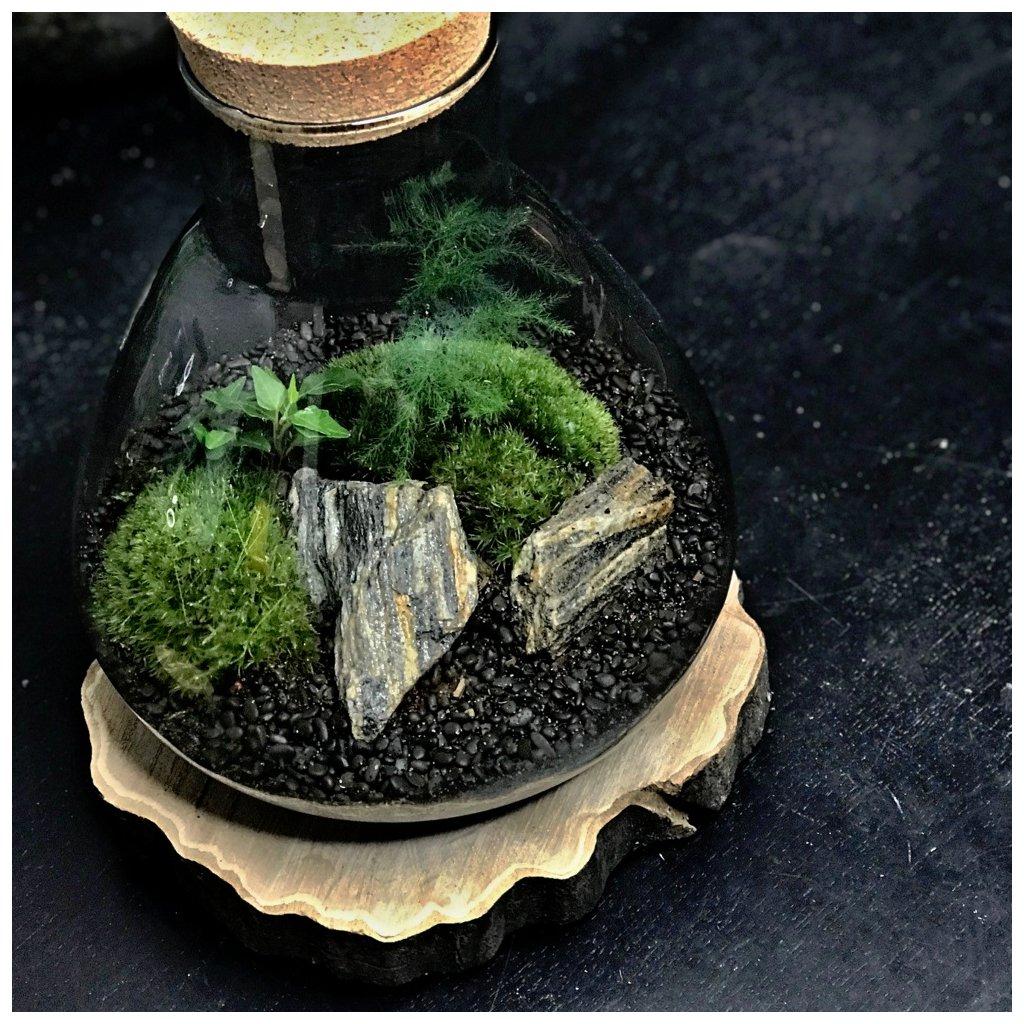 terrarium Elvella