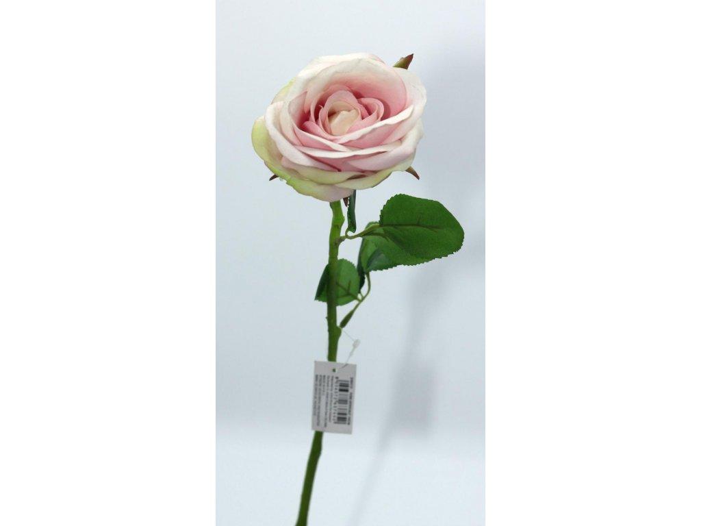 Růže světle růžová