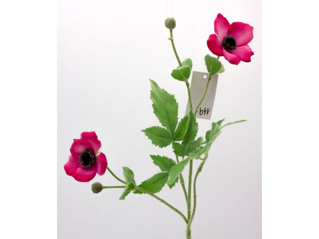 Anemonka tmavě růžová