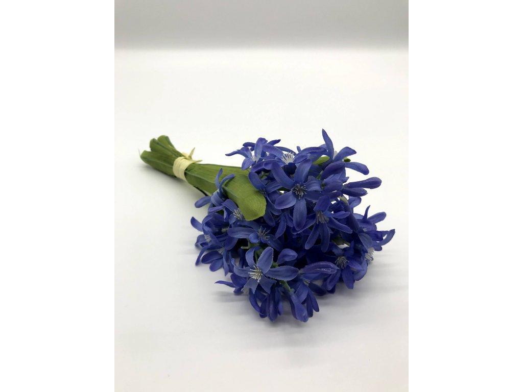 Hyacint modrý