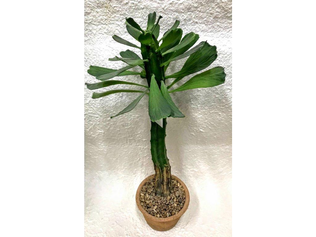 Kaktus umělý v nádobě