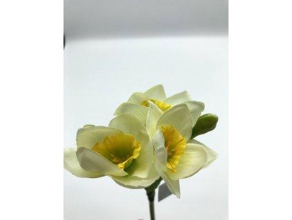 Narcis bílý žlutý střed