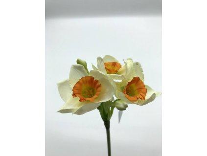 Narcis bílý oranžový střed