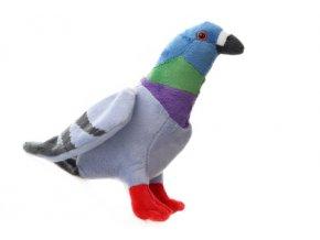 Plyš holub