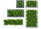 Živé zelené OBRAZY
