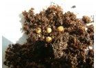Osmocote - speciální hnojiva