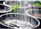 Ostatní vodorozpustná hnojiva