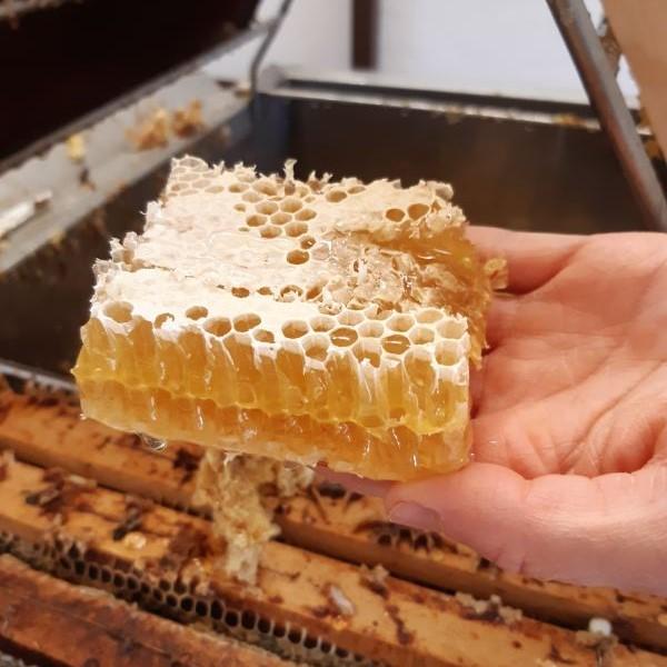 Včelí plástev