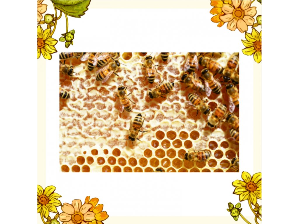 včelstva