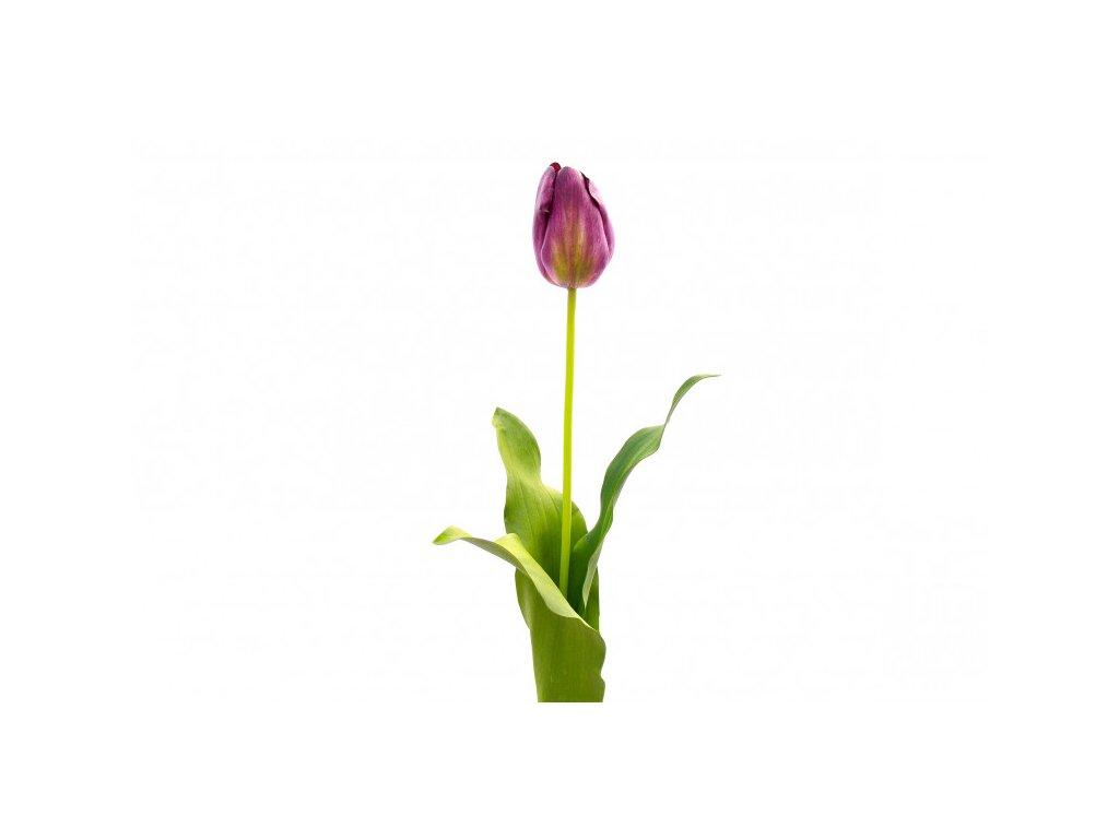 Dekorační tulipán Kelly Hoppen fialový - set 2