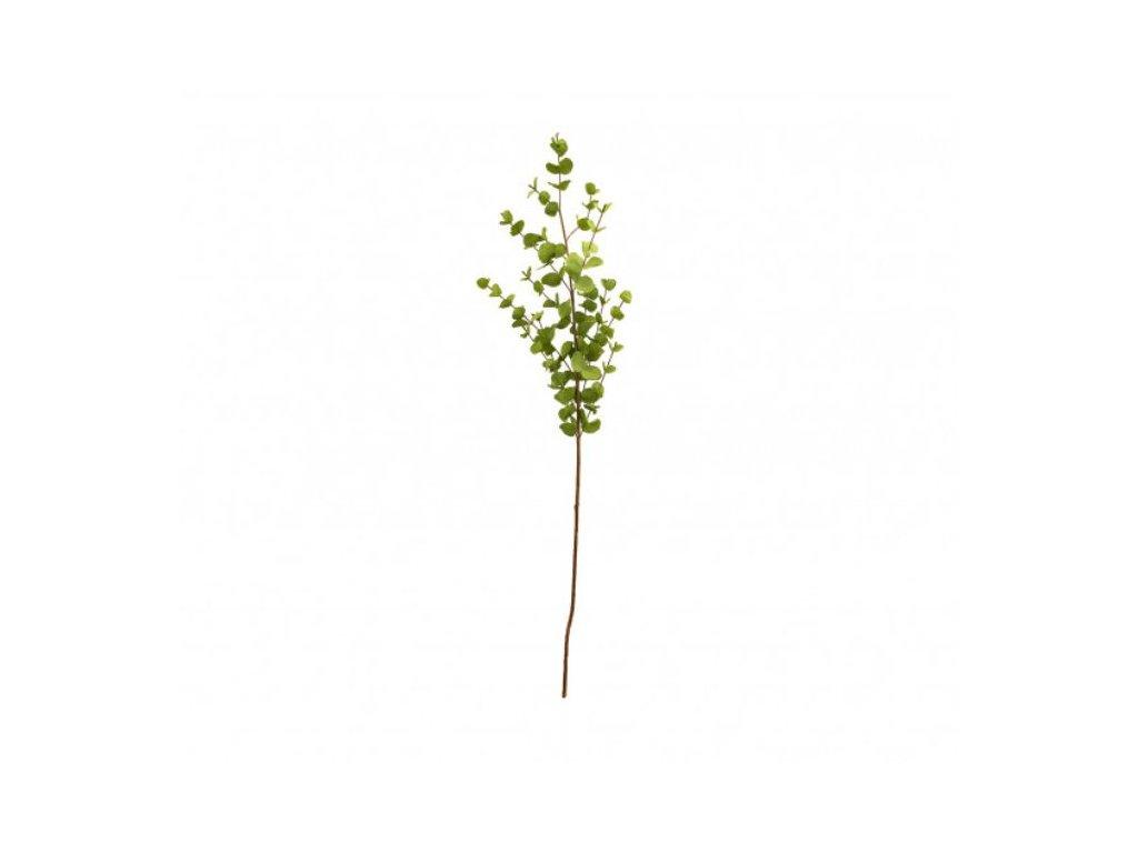 Eucalyptus dlouhý