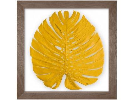 obraz phylomonstera žlutá kouřový dub