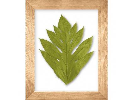 obraz arbre a pain zelená přírodní dub