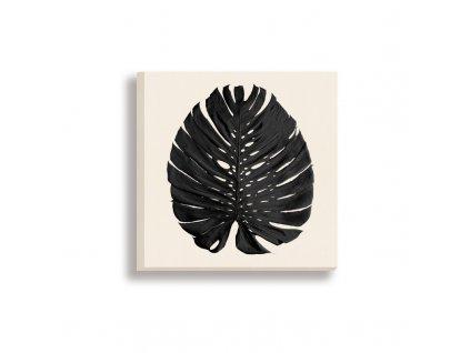 obraz na plátně phylomonstera černá