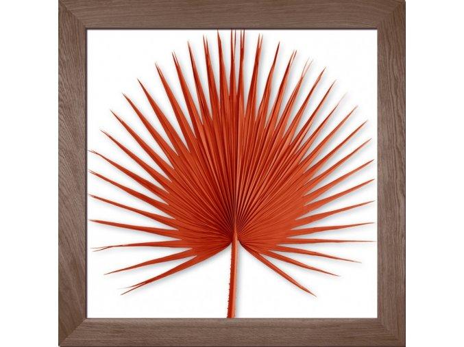 obraz washingtonia palm oranžový rám kouřový dub 85x85