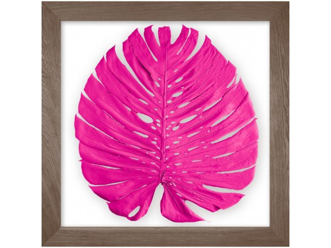 Obraz phylomonstera neon růžová kouřový dub