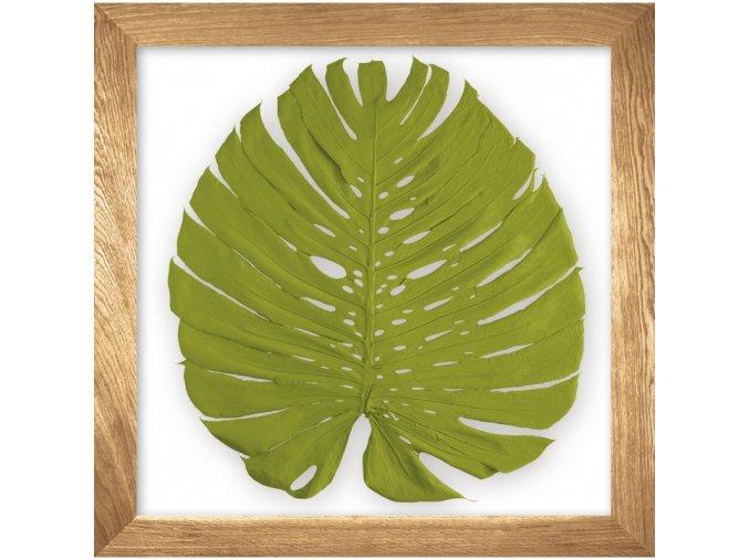 obraz phylomonstera zelená přírodní dub