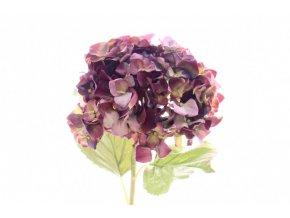 Hortenzie fialová - set 2