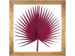 obraz washingtonia palm tm.růžový rám přírodní dub