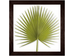 obraz washingtonia palm sv.zelený rám čokoláda