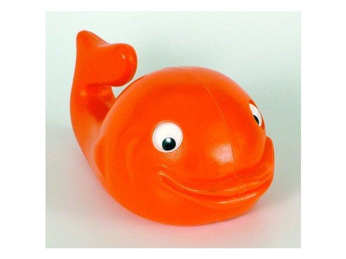 Mořská ryba *