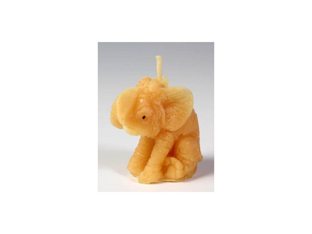 slon svicka ceskejmed