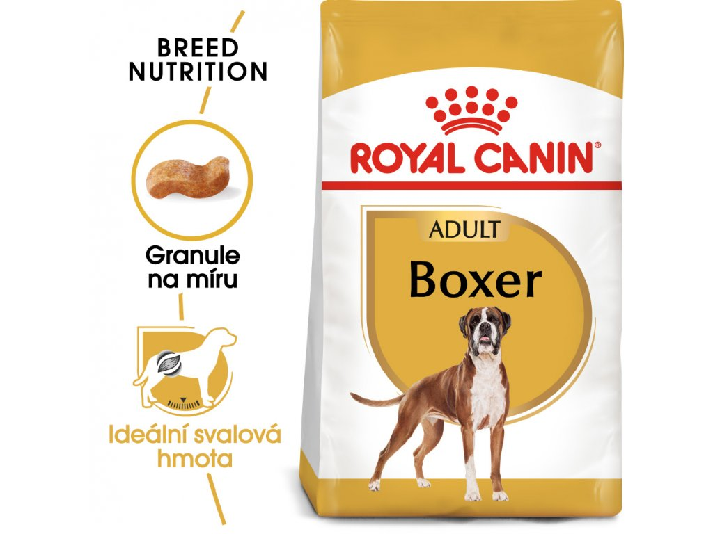 1 boxer adult