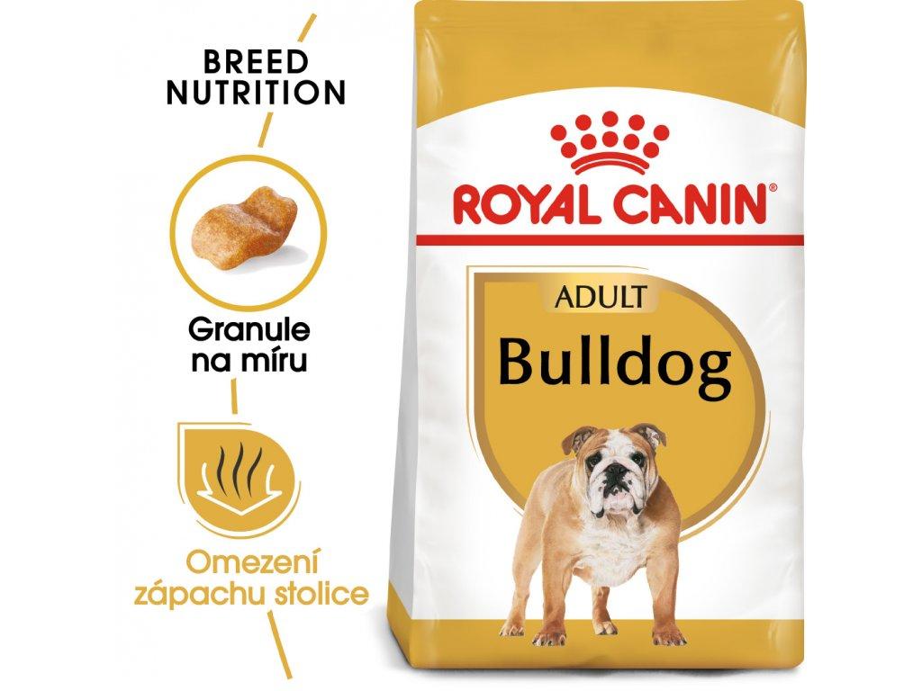 1 bulldog adult