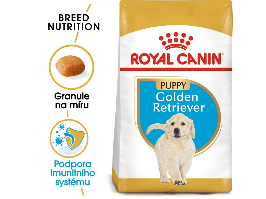 1 golden retriever puppy