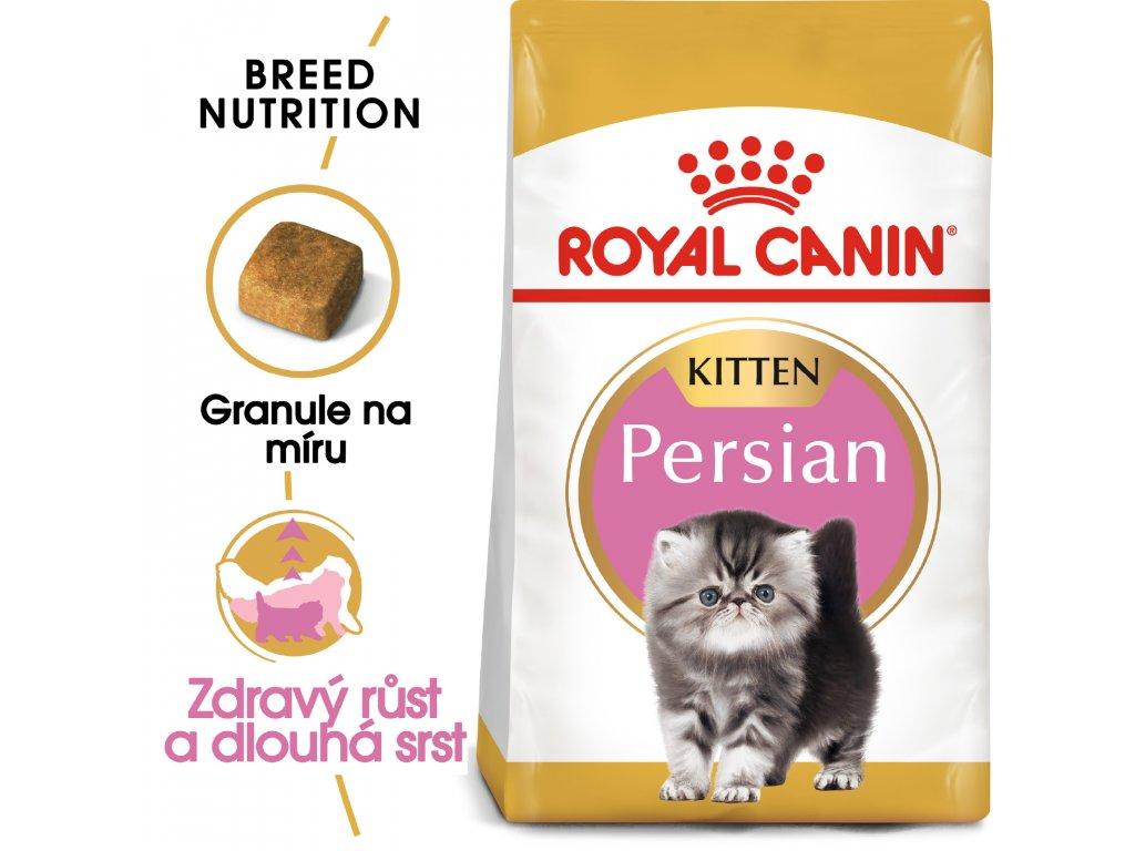 1 persian kitten