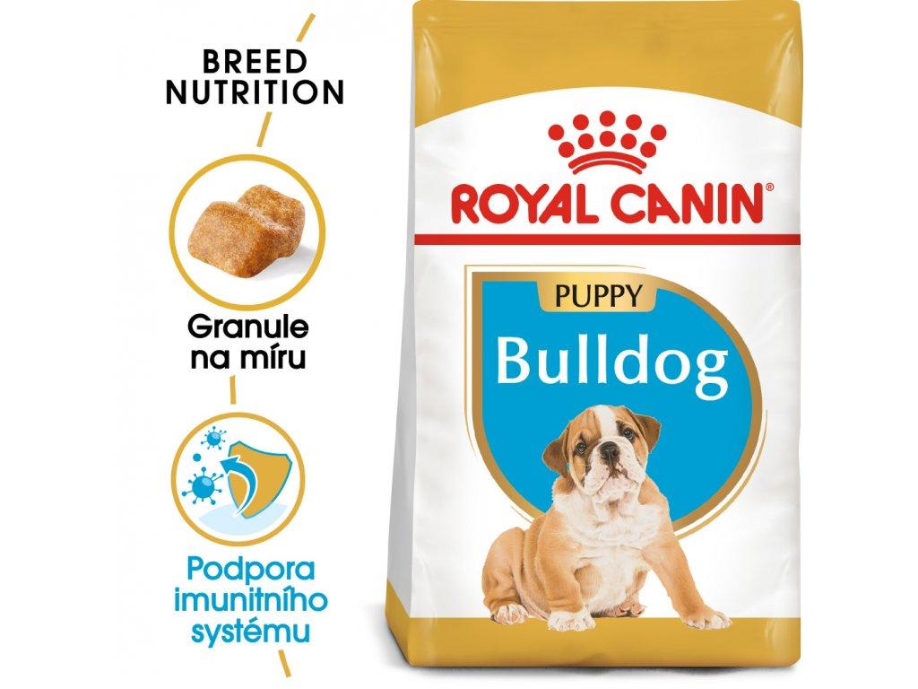 1 bulldog puppy