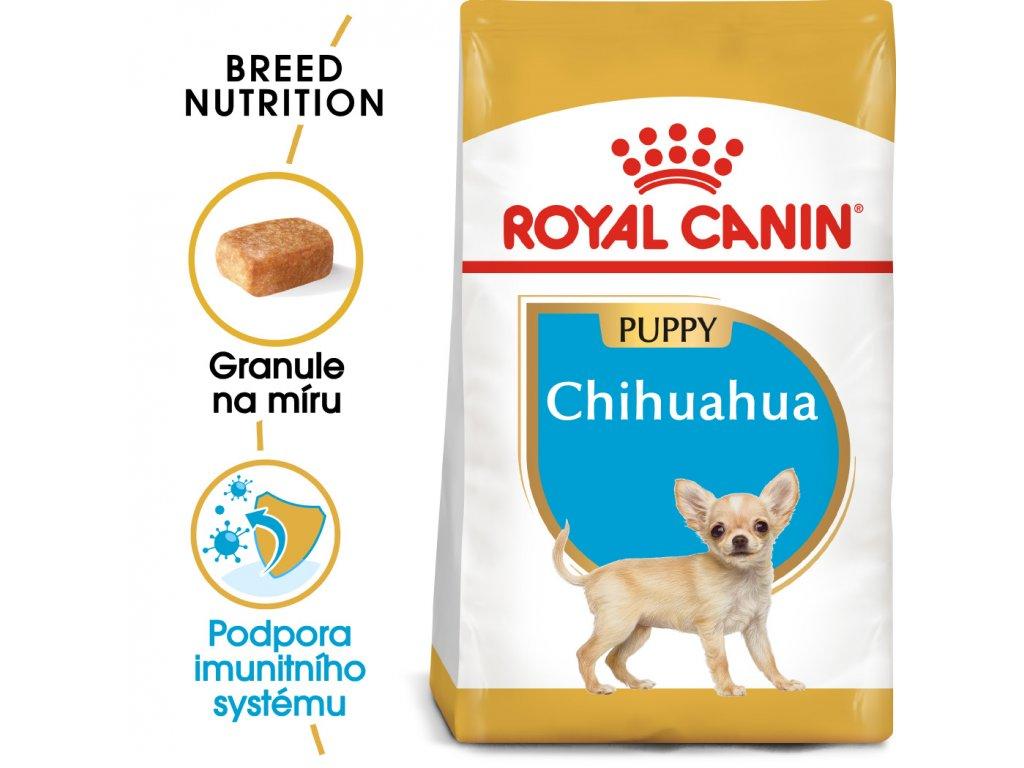 1 chihuahua puppy