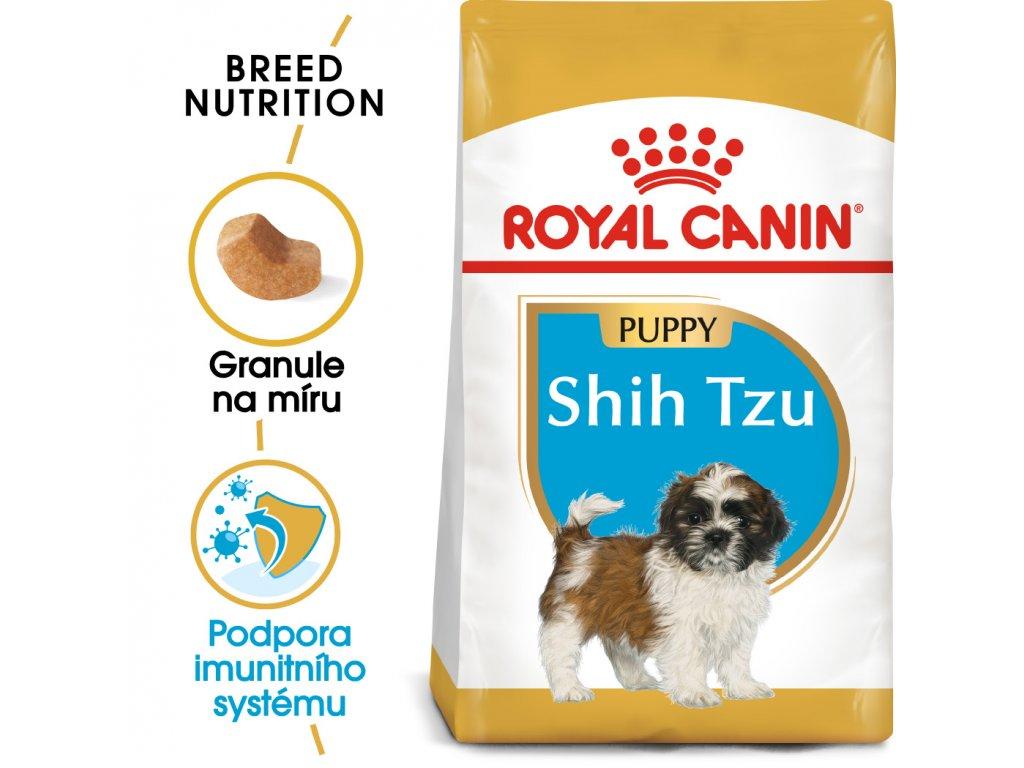 1 shih tzu puppy