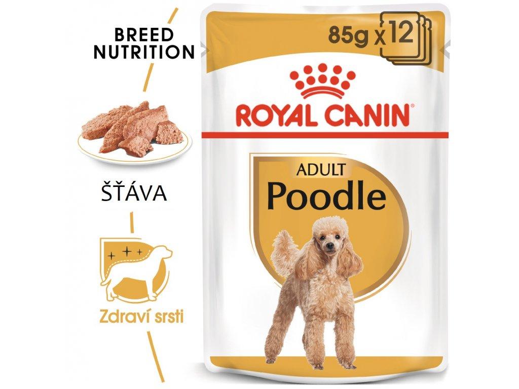 1 poodle 12x
